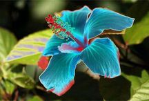 Flori  deosebite