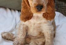 Puppiesssss and doggiesssss!