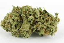 Strain Genie / Picking the best strain for your needs, mood, or interests. The Strain Genie has you covered ;)