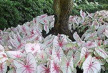 Plant catalogue of Garden