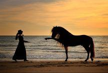 horses!!!!