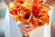 Flowers / by Tammy Wren