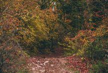 Autumn Осень