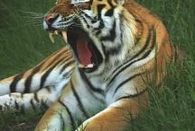Animales / Imagenes de animales y naturaleza