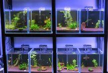 aquarium komunal