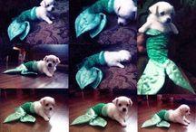 Mermaid Funnies