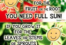 gardening tips n ideas
