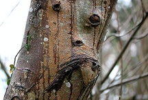 Things Arboreal / If trees could talk...