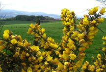 flora galicia