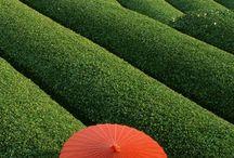 Japanese umbrela -Wagasa 和傘 / Wagasa 和傘