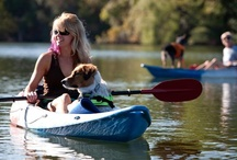 Fido On The Go!! (Pets and the Active Lifestyle) / Pets can provide endless energy and companionship just perfect for an active lifestyle. Discuss with your veterinarian what level of activity is right for your pet. Get out there and soak life in!!