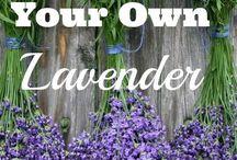 Lavender Love / Lavender Growing, Lavender Recipes, Lavender Benefits