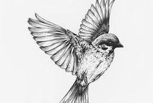 vogels tekenen
