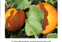 Gardening - Squash, Cucumbers and Pumpkins