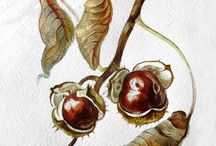 Botanical Art for inspiration / Best botanical artists from the world.