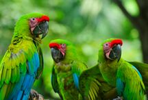 Wildlife of Central America / Experience the wildlife that thrives on tropical beaches and lush rain forests throughout Central America
