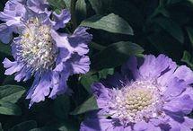 Flora / by Dahlia Murray