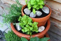 bylinky v kaskade na terasu Projects to try