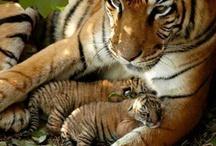 Animals / All animals