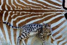 Animals / by Nash Anderson