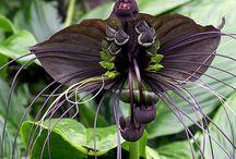 black flower / by Dawn Badeau