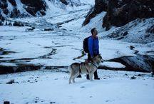 Hondvriendelijke vakantie bij Dogwalktrail / Take your dogs on a holiday Neem je honden mee op een dogwalktrail vakantie