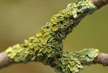 Nature & Textures
