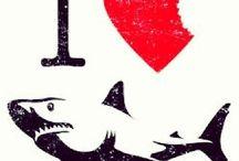 Loving sharks