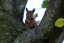 Wildlife in Perthshire / Wildlife / by Gilmore House Bed & Breakfast