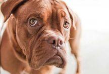 Come educare il proprio cane / Vuoi educare il tuo cane ma non sai come fare?