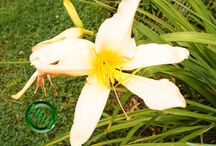 TRUE VINE DIGITAL PHOTOGRAPHY, FLOWERS N PLANTS~ / TRUE VINE DIGITAL PHOTOGRAPHY, FLOWERS N PLANTS~