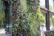 green walls / vertical gardens