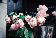 Pretty petals / by Andrea McClung
