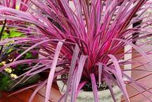 Low watering plants / Low watering plants