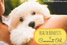 Pet Health Care Tips