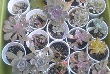 christies crazy cactus n succulents