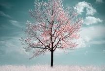 Trees / by Julien Hering