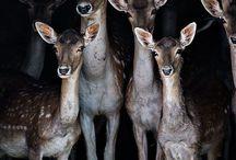 . : Bambi : .