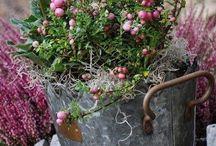 Giardinaggio fiori esterni