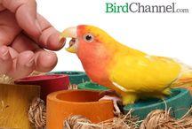 Birds info