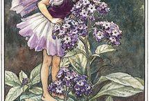 fairy plaatjes