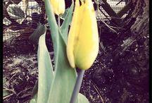 Mijn Goudsche tuin