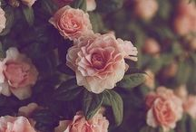 Flowers::