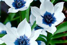 fiori meravigliosi