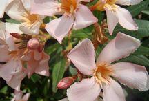 Flowers / květiny detaily