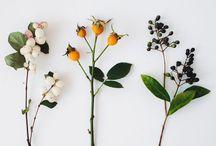 Çiçek Senfonisi