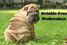 Wrinkle Free Wednesdays