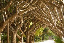 Gardens & Landscape Architecture