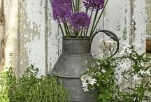 kvety,záhrada