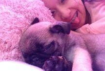 Rocky / Pug